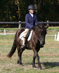 Pony: Gotland gelding available for partial lease