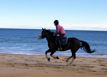 rider on horse galloping along beach
