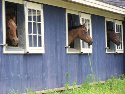 horses looking out stable windows at Dunroven Farm